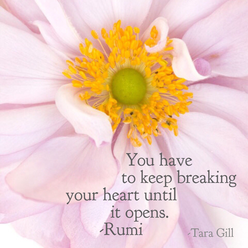 You have to keep breaking your heart until it opens. -Rumi