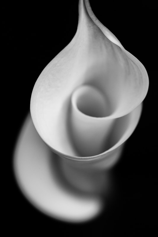 Calla Lily 1 BW, 2018 Tara Gill Photo